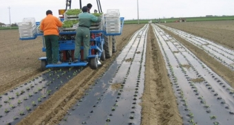 "Biodegradable mulching film: the long-awaited European Standard on ""biodegradability in soil"" criteria enters into force"
